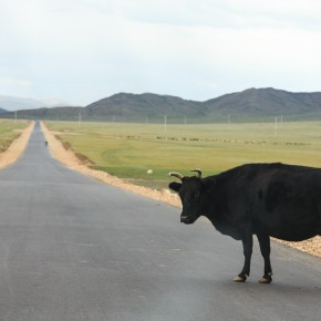 Erstes Tier auf der Straße