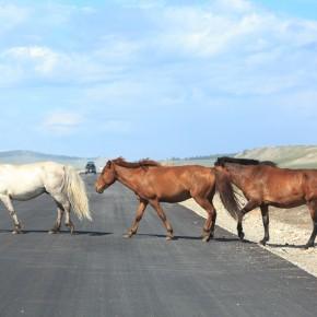 Drei Tiere auf der Straße, im Gänsemarsch