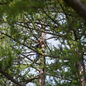 Handyempfangsbaum