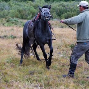 Pferde zureiten I