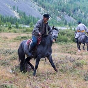 Pferde zureiten II