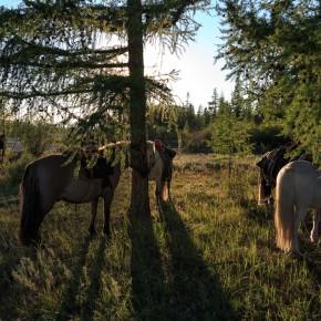 Pferde geparkt