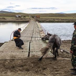 Wenn das Pferd nicht über die Brücke will, hilft ziehen halt auch nicht