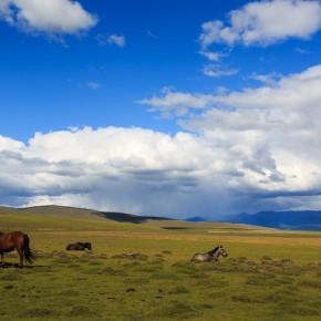 Pferde beim Erholen