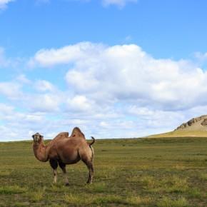 Kamel, was sonst