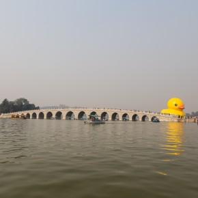 Duck and bridge