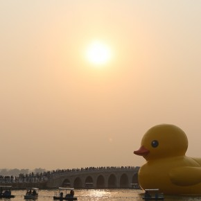 Duck @ summer palace