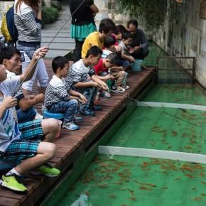 Fishing fun for kids, caught goldfish can be kept :)