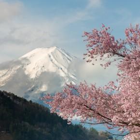 Fuji-san in voller Pracht mit Sakura Baum im Vordergrund. Nur für ein paar Minuten hatten wir Sonne.