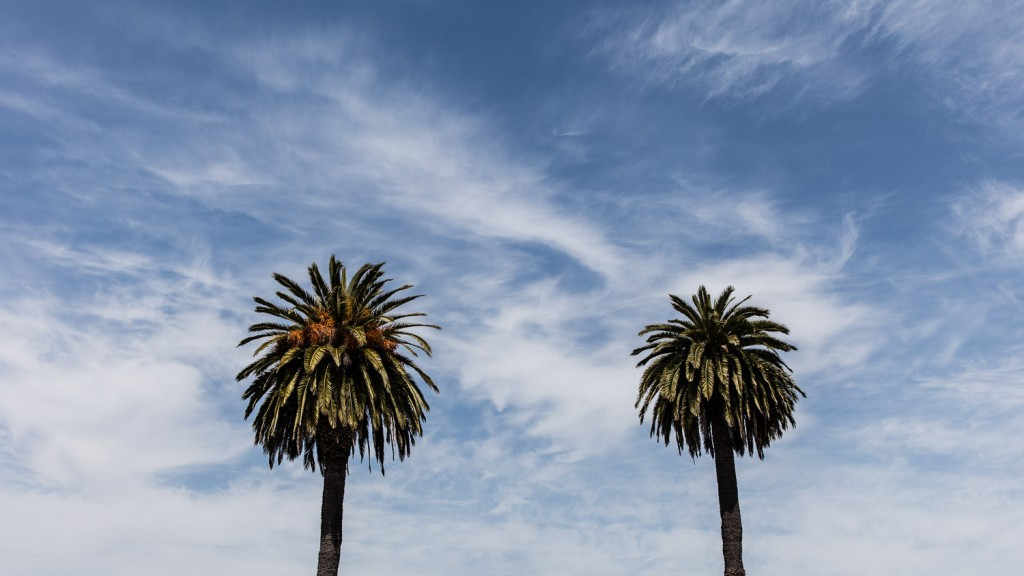 Palmen gibt es hier reichlich